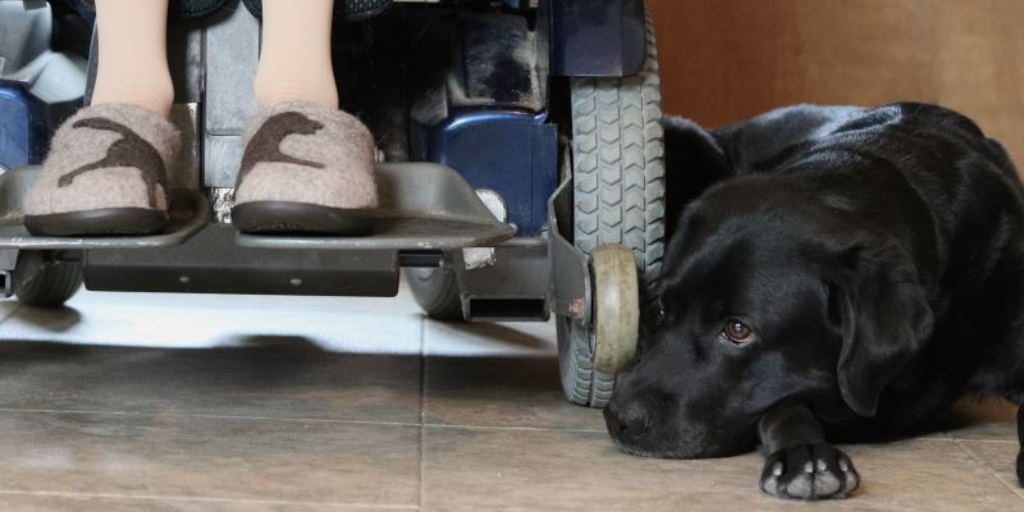 An important Service Dog skill . . .  Patience!