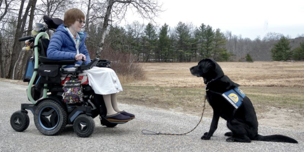 A service dog's thoughts on social distancing!