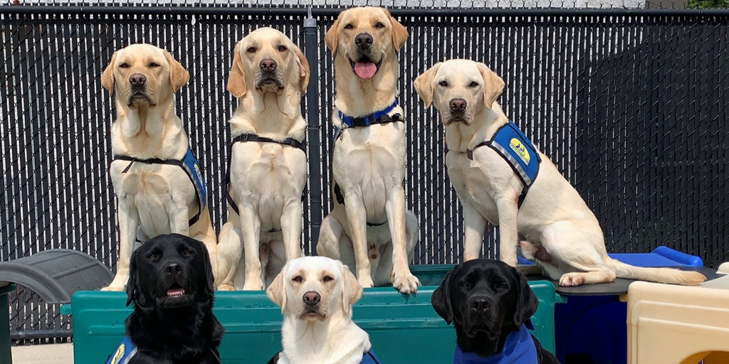 Service Dog Team Training!