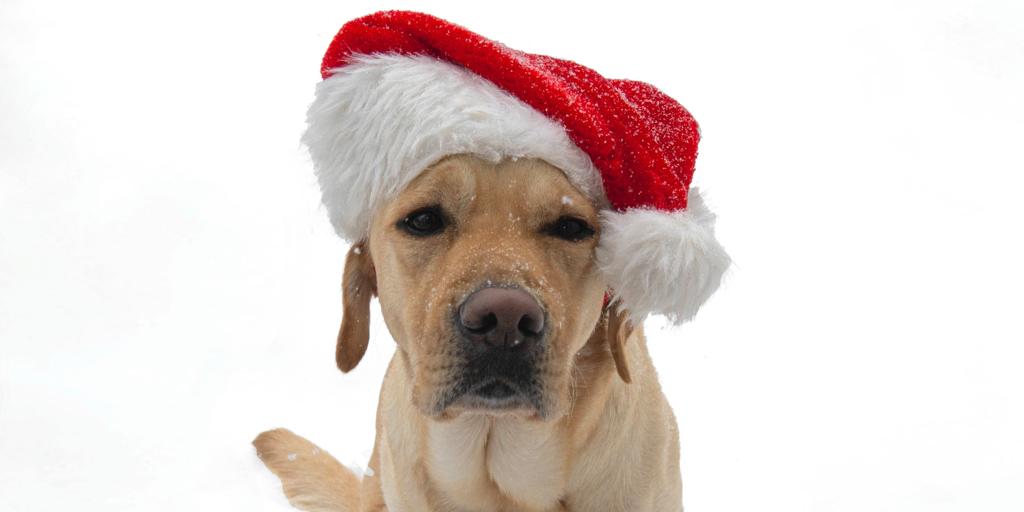 A joyous holiday season!