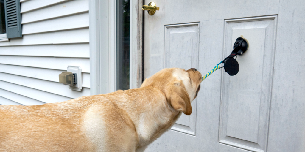 A service dog helps with doors at home!