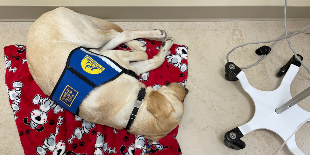 The patience of a service dog!